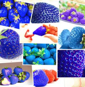 فراولة-زرقاء-بأشكال-متنوعة