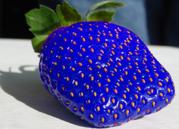strawberry-blue