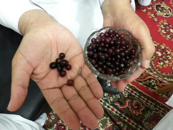 الكباث فاكهة تشبه فاكهة الكرز ولكها أصغر في الحجم وألذ في الطعم