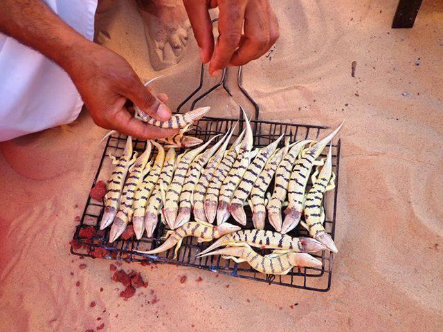 أسماك الرمال واحدة من أفضل المؤكلات في الصحراء
